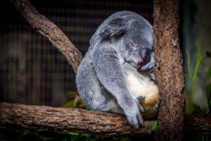 Chacun ses besoins de sommeil - Temps de sommeil : tous égaux ?