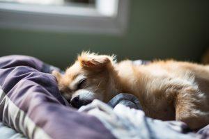 Sommeil réparateur - Hypnose et sommeil