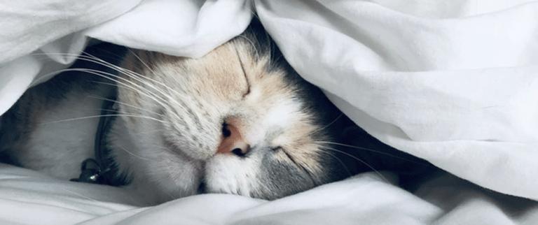 Comment bien dormir ? 13 conseils pour mieux dormir