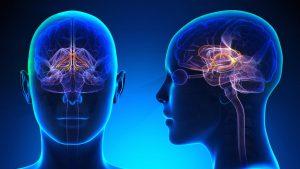 Activité cérébrale - Ce que fait votre cerveau pendant que vous dormez