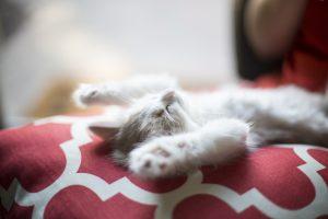 Dormir sur le dos - Notre position la nuit influence nos rêves