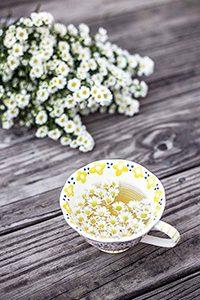 Camomille - 10 plantes pour mieux dormir
