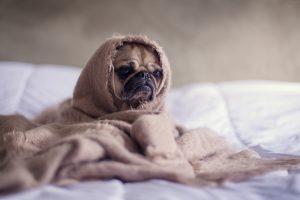Troubles du sommeil - Hypnose et sommeil
