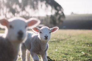 Compter les moutons - Les idées reçues sur le sommeil