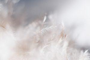 Les acariens - Allergies et sommeil
