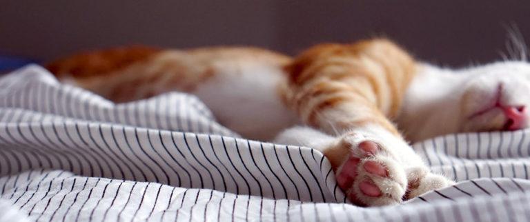 Combien d'heures de sommeil dans l'idéal ?