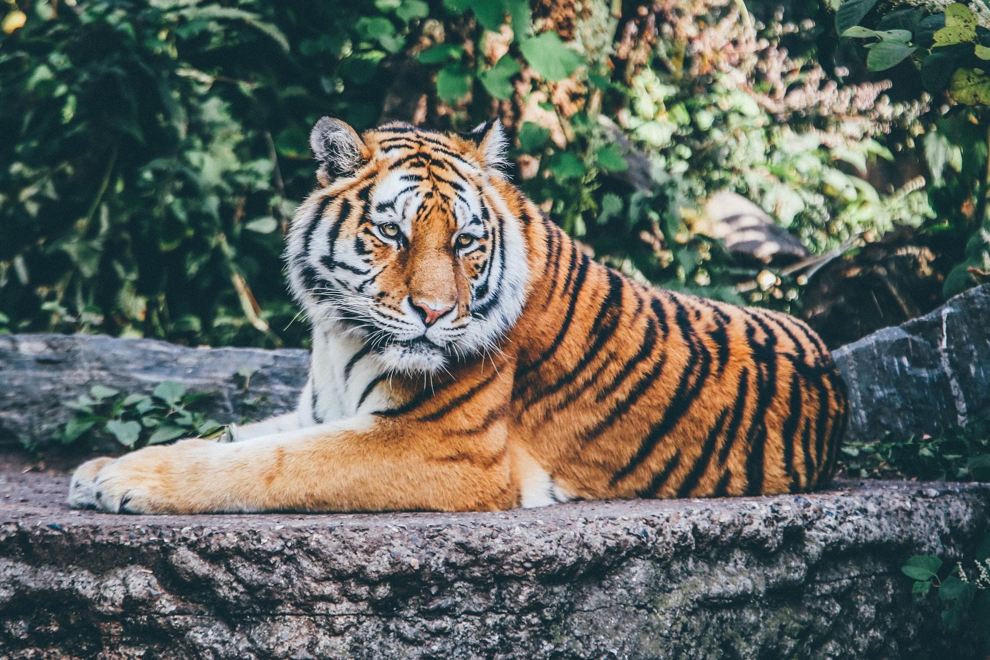 Tiger King – Au Royaume des fauves